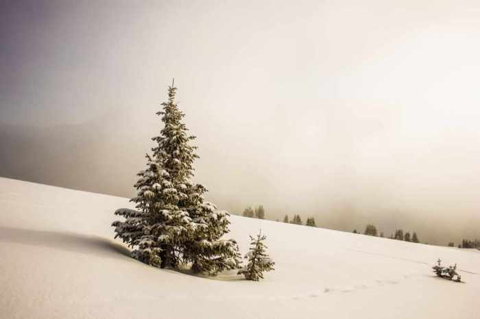 snowy-peace